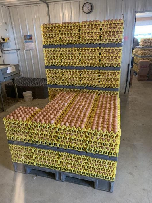 Free Range Farm Fresh Brown Eggs